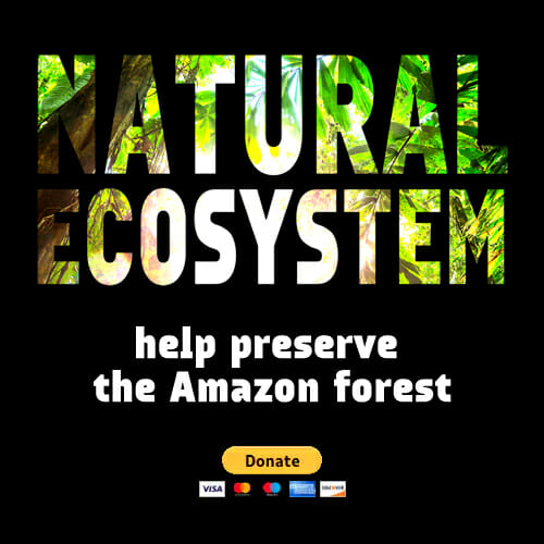 Natural Ecosystem - Help preserve the Amazon forest